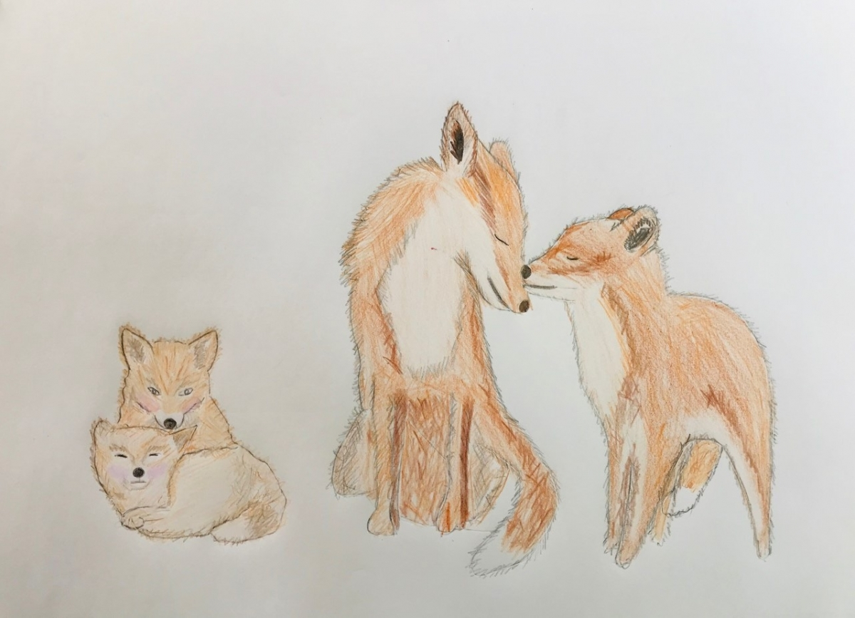 Foxes Petting 1