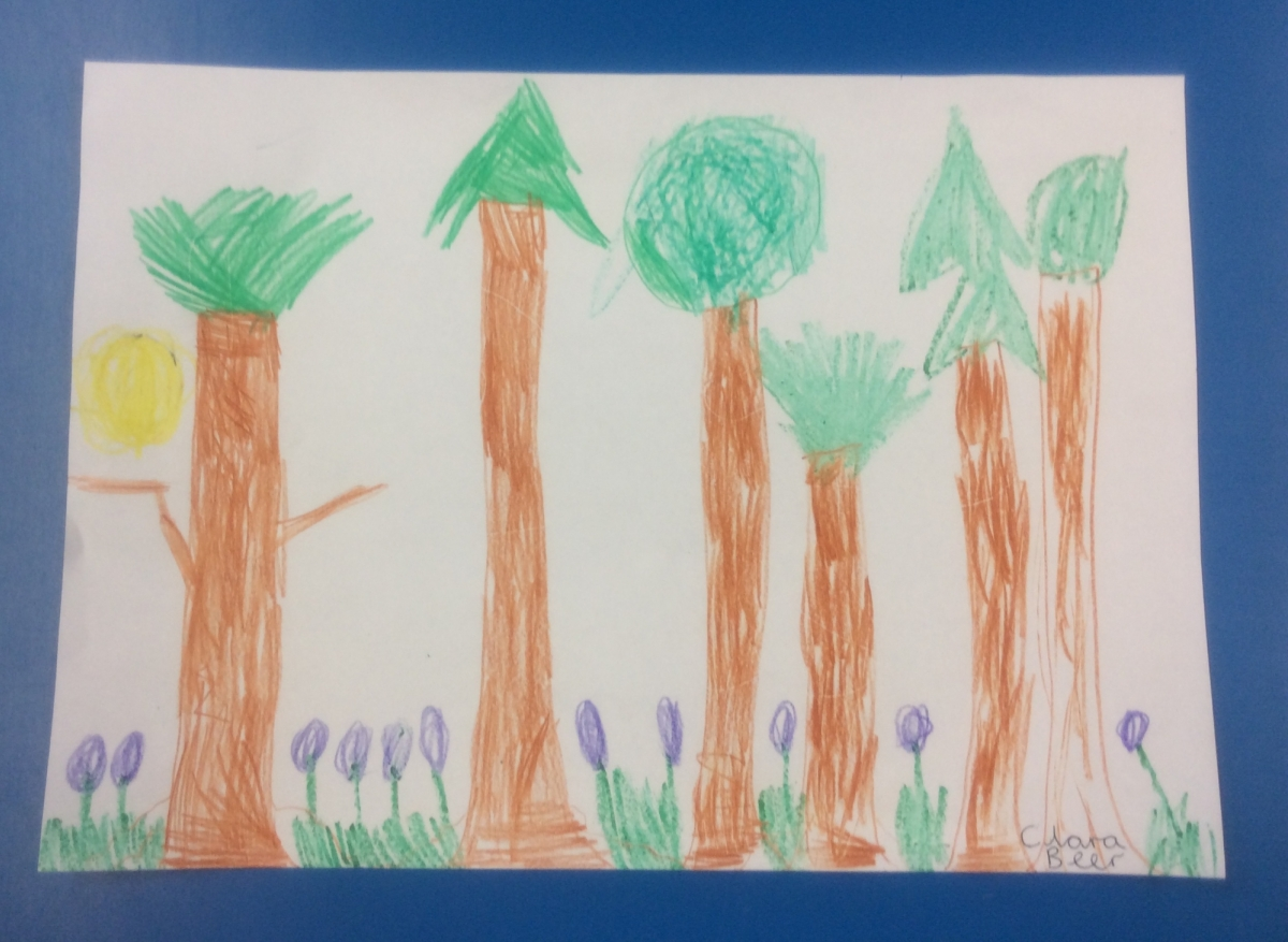 Landscape Tall Trees With Triangle Tops 1