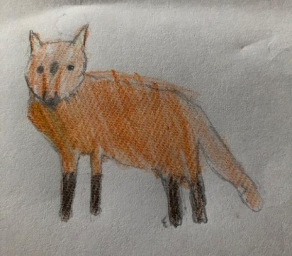 Fox With Black Legs 1