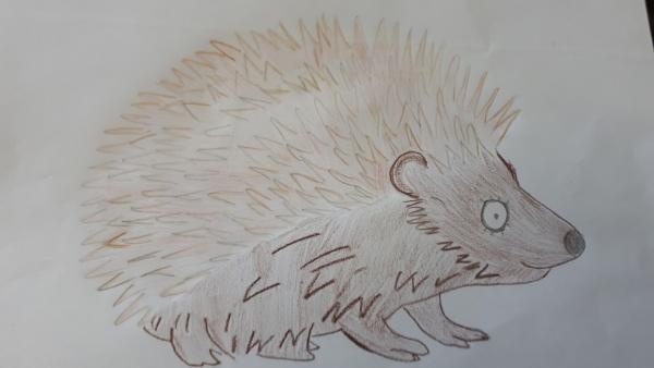 Hedgehog Surprised 1