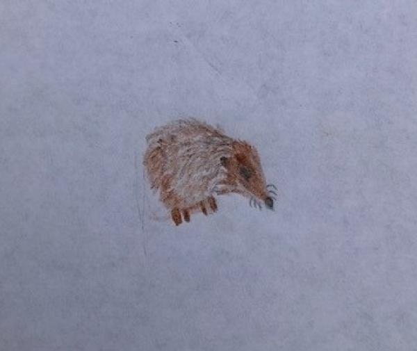 Hedgehog Tiny