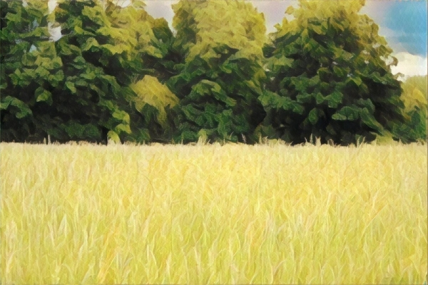 Landscape Field Closer Trees