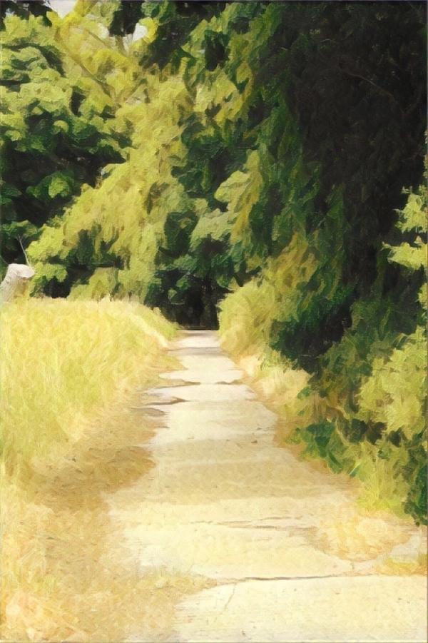 Landscape Photo Path